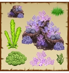 Types of green seaweed and purple corals vector