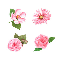 Watercolor sweet pink flower for decorative vector