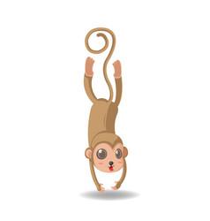 monkey animal funny cartoon isolate vector image
