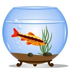 Fish in a round aquarium vector