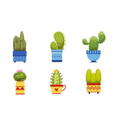 cactus plants in flower pots set potted cactuses vector image