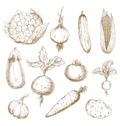Fresh vegetables hand drawn sketches vector