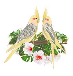 funny parrots yellow cockatiel cute tropical bird vector image