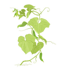 Cucumber plant colour sketch green leaves one vector
