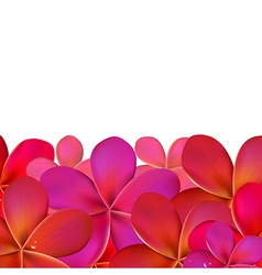 Pink Frangipani With Border vector image