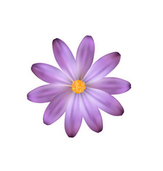 purple isolated flower flower like a daisy vector image