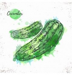 Watercolor cucumber sketch vector image
