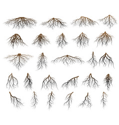 Set of tree roots vector