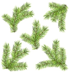 Spruces Branches Isolated on White Background vector image