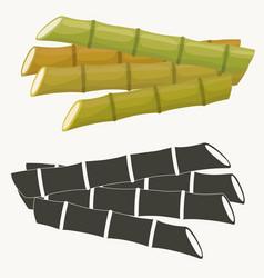 sugar cane set cane plant sugarcane harvest vector image
