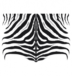 zebra pattern background texture vector image