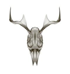 Deer skull 3d style for print tattoo t vector