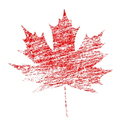 Grunge Maple Leaf vector image vector image