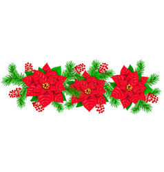 garland poinsettia branch fir red berries holly vector image