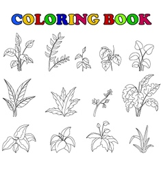 coloring book of set tropical plant vector image