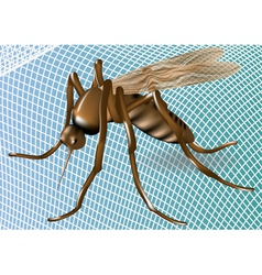Mosquito net and mosquito vector