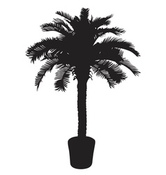Palm tree silhouetter vector