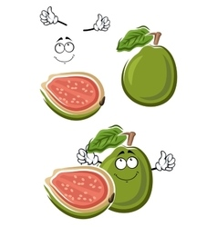 Ripe cartoon green guava fruit vector image