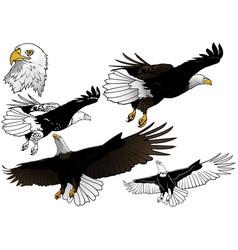 set flying bald eagle vector image