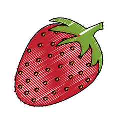 strawberry fresh isolated icon vector image