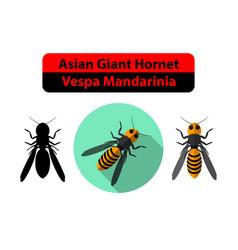 asian giant hornet or vespa mandarinia on white vector image
