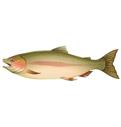 Brown trout vector image vector image