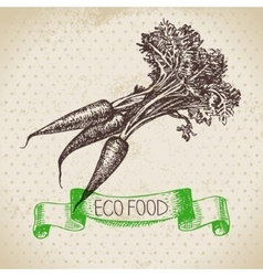 Hand drawn sketch carrots vegetable Eco food vector image