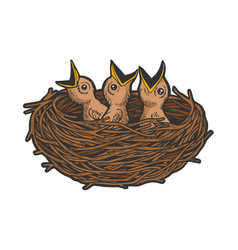 nestling bird in nest color sketch engraving vector image