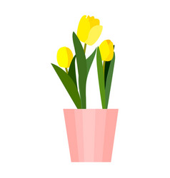 yellow house tulips plant in pot green leaf tulip vector image
