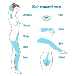 area hair removal vector image