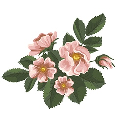 Wild rose vector image vector image