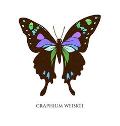 Set hand drawn colored graphium weiskei vector