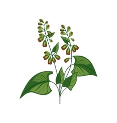 Wild Flower Hand Drawn Detailed vector image