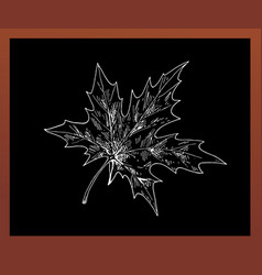 black school chalkboard with a maple leaf drawn vector image vector image