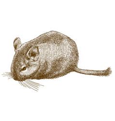 engraving of degu vector image