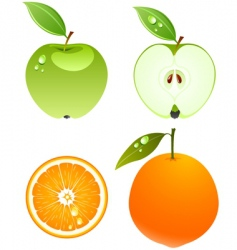 apple and orange vector image