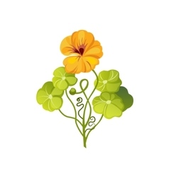 Nasturtium Wild Flower Hand Drawn Detailed vector image vector image