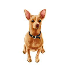brown russian toy terrier dog vector image