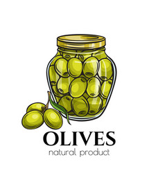 Canned olives in glass jar vector