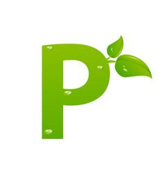 green eco letter p illiustration vector image