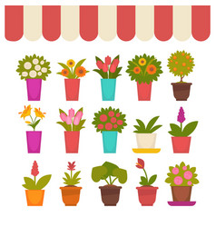flowers in pots set under clothing cover vector image