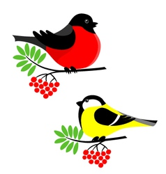 bullfinch and tit vector image