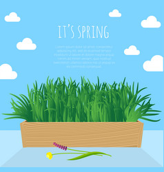 Fresh green spring grass s in the pot vector
