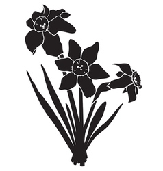 Narcissus silhouette vector