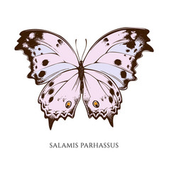 set hand drawn colored salamis parhassus vector image