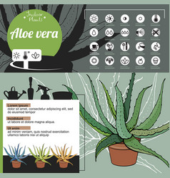 template for indoor plant aloe vera tipical vector image vector image