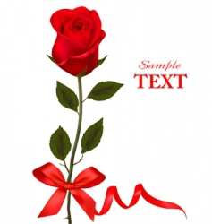 beauty red rose with ribbons vector image vector image