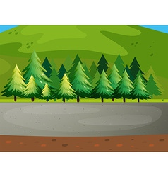 Pine trees vector image vector image