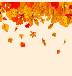 autumn leaves fall isolated background golden vector image