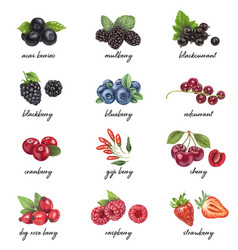 fresh berries list with names vector image